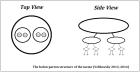 Holon-parton structure of the meme V2