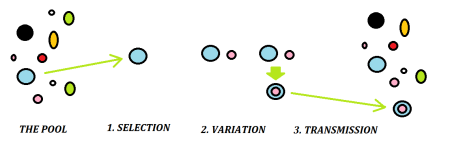 Selection, Variation, Tranmission